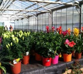 Fleurs dans les serres du Lycée Agricole