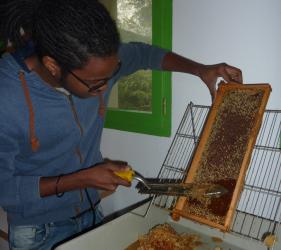 Rucher récupération du miel