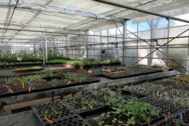 Connaissance et gestion des végétaux