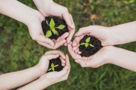 Gestion durable de l'environnement appliquée aux espaces verts