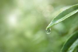 Gestion et préservation de la ressource en eau dans les jardins