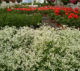 Culture fleurs lycée agricole